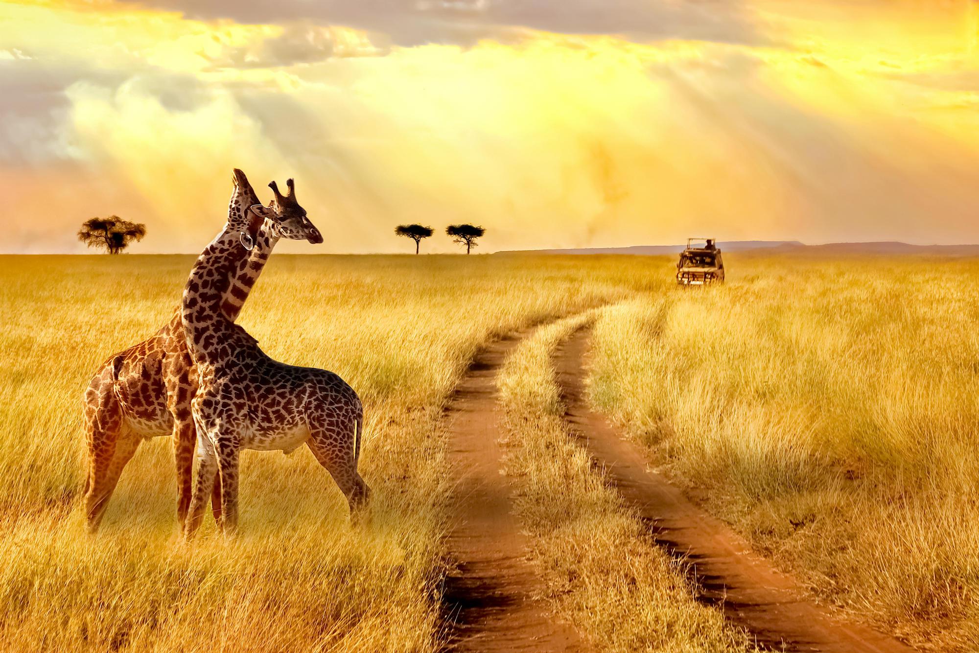 Risultati immagini per SUD AFRICA